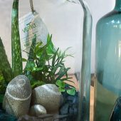 Atelier Plantarium à Etal de l'Hexagone avec Vertilt